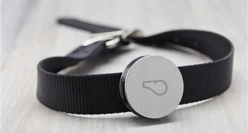 Activity tracker for dogs?